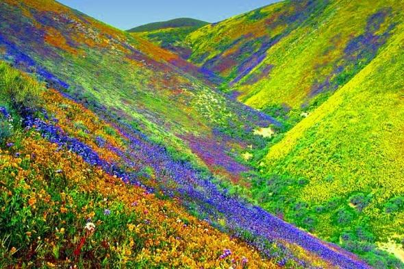 Uttarakhand, India sau valea florilor