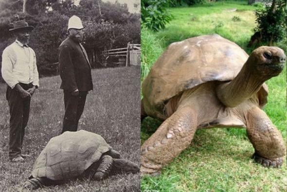 01.giant-tortoise-jonathan6-650x324