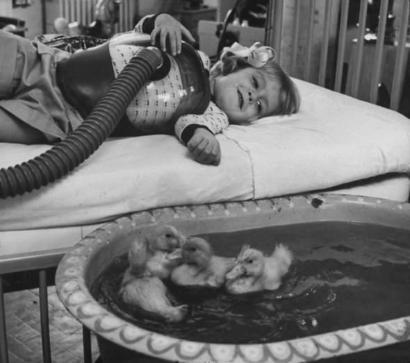 Animalele sunt utilizate ca parte a terapiei medicale, 1956