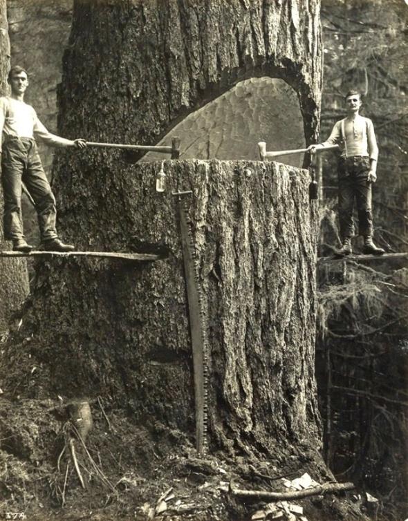 Tăietori de lemne, Portland, Statele Unite ale Americii, 1915